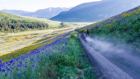 Colorful flowers alongside a dirt road in the Gunnison Valley near Crested Butte