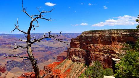 Saguaro National Park Visit The Usa