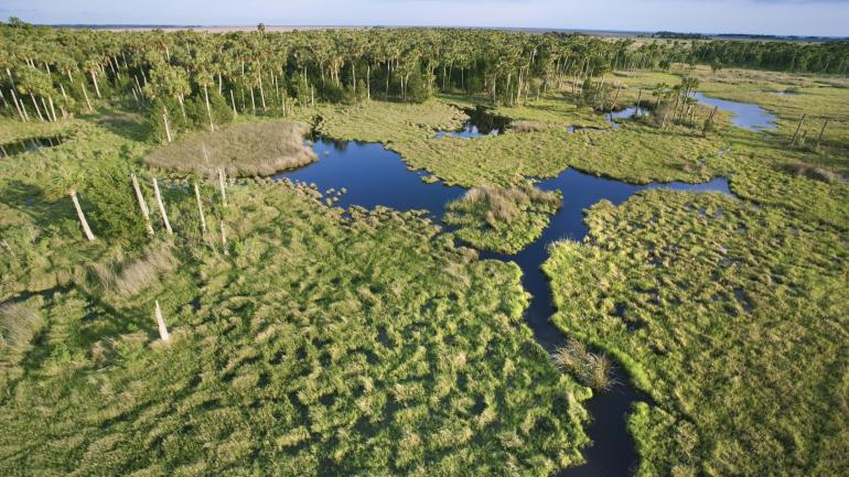 an overview of the everglades Traveling in florida isn't complete without stopping at everglades national park—a swampland just outside miami, where visitors can see alligators.
