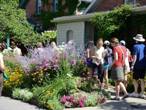 On the Garden Walk in July