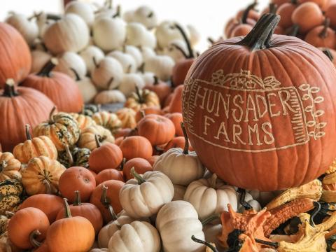 Pumpkins on display during the Hunsader Farms Pumpkin Festival in Bradenton, Florida